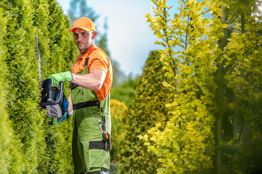 reliable tree services expert
